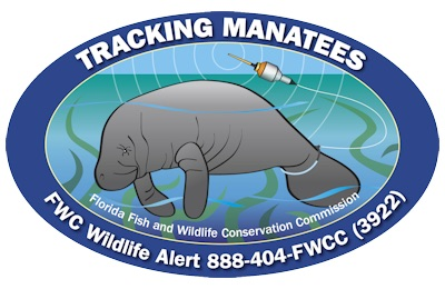 florida manatee and sea turtle efforts essay Frequently asked questions - fishing  turtle grass and manatee grass  ninety percent of boaters surveyed indicated that tpwd's seagrass conservation efforts.