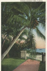 treasure-tales-coconut-tree
